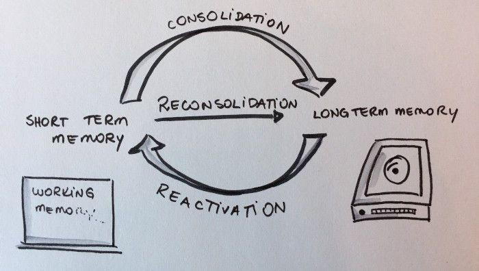 Ilustração demonstrando o ciclo de memorização que vai da memória curta para a memória de longo prazo, consolidando o que foi aprendido.