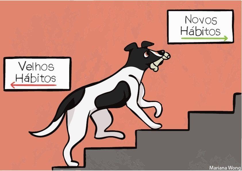 Cachorro subindo escada rumo aos novos hábitos