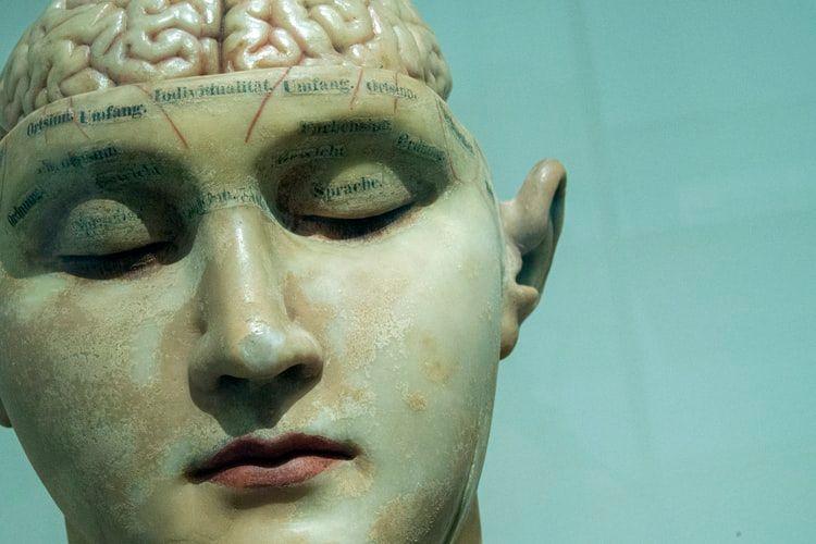 Imagem de um boneco humano com metade da cabeça aberta mostrando o cérebro.