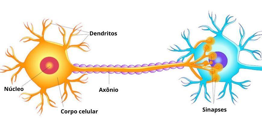 Ilustração de um neurônio